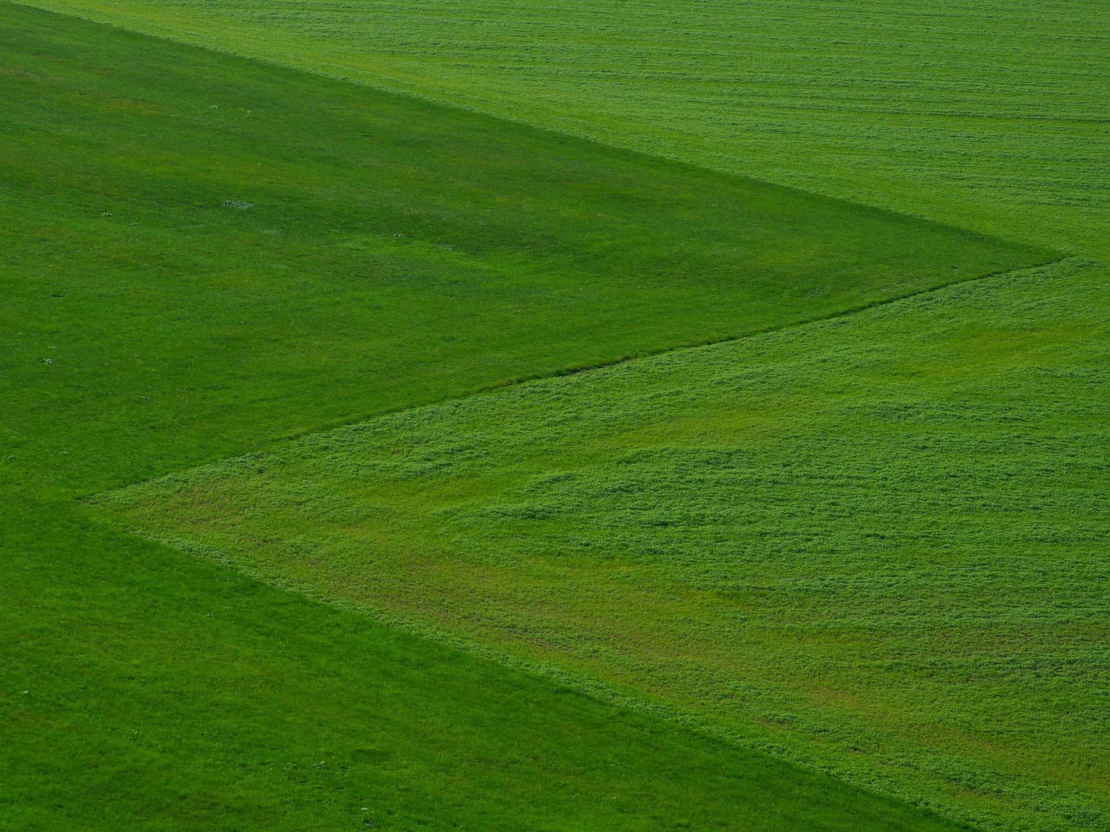 albert valley turf meadow