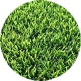 empire-turf-grass