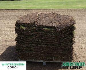 Wintergreen Couch Green All Year Round Albert Valley Turf